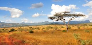 Tanzanie safari image à la une