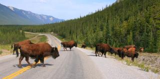 Autotour Canada