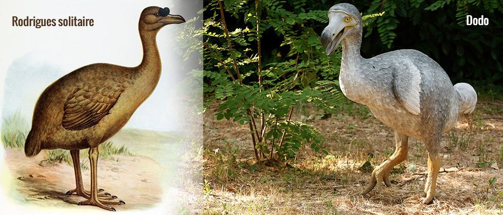especes-oiseaux-endemiques