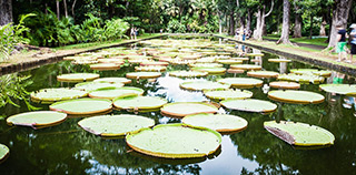 jardin-pamplemousse-nenuphar-thumb