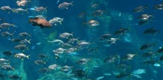 Aquarium en  Chine