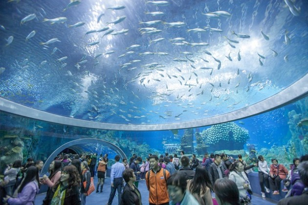 Aquarium Chimelong Ocean Kingdom