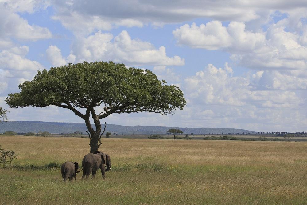 itinéraire en Tanzanie